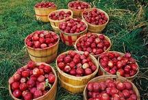 Homesteading - Vegetable Gardening, Canning, etc.