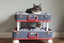 CATS - Olive & Arthur / Ideas for our sweet kitties Olive and Arthur!  / by Camryn Gillmor