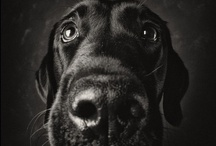 Dogs...Because They're People too...♥♥♥ / by Stacey Utley