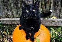 Halloween / by Ashley Ramage