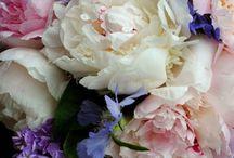 Bloemen / by Linda Bruinsma
