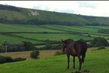 Horses / Horses and ponies