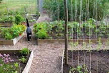 Gardening Inspiration / Beautiful and inspiring pins to get us out and gardening.