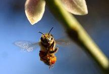Bugs / by Becky McQuinn