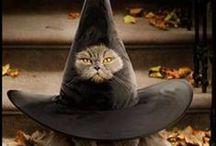 Kitties / by Becky McQuinn