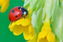 Lady Bugs / It's the only Bug, anyone likes.. / by Connie Jean Klein
