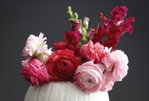 Home - Decor & Structure / by Jehle Flowers