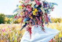 Secateur / FLORAL | GARDENS | FLOWERS