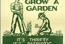 Budget Gardening...How to save money with the GrowVeg garden planner..... / by GrowVeg.com