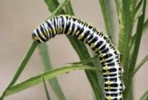 Garden Pests and Organic Solutions .... / Garden Pests and Organic, sustainable solutions to the problems they bring....