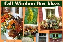 Window Box Ideas / Need some PINspiration for your window boxes? Discover beautiful flower combos, different types of window boxes and more! Fall, summer, no matter what season- you can make your window box look faun-tastic!