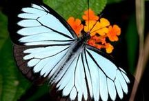 butterflies / by Ann Cox