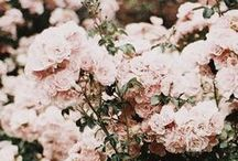 Gardens Flowers and Outside / by Amelia Read
