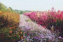 flowers & greenery. / by Lauren Buck