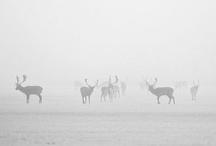 Hunting Hubby / by Eunice Borojan