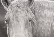 Jennie Norris - Artist / The art of Jennie Norris. Southwest & wildlife art in graphite, watercolor & photography.