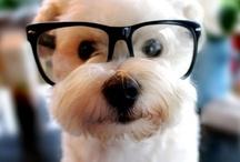 Pets & Cute Animals / public / by Sofy Cohen de Nacach
