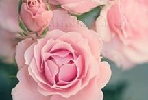In the name off the Rose / Rozen. Roza. Rose. Roses.
