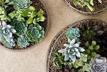 Plants, Gardens, Greenery