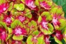 Perennials 2014