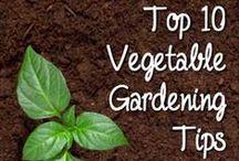 Gardening / Gardening tips And tricks / by Brette - Ashley