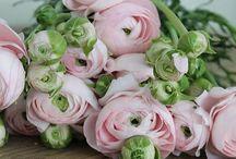 Flowers / Ranonkels Pioenrozen Rozen Bloemen Flowers.