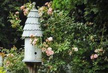 Bird & Fairy Houses / by Angela Mabray