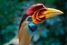 birds / by Iman Ahmed Naguib