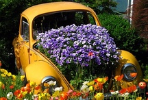VW/camper love