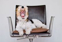 Woof! / by rebecca cahak
