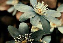 FLORES-SIENDO / La tierra se ríe en flores. Edward Estlin Cummings  Siempre hay flores para el que desea verlas. Henri Matisse  / by Amelia Ramirez