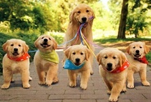 A Dogs Life / This board is all about fantastic dogs, cute, funny, naughty...all dogs!!! / by Carol Whitney