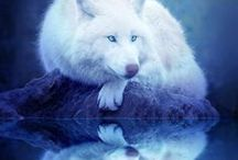 Free Spirits °•❤~●○•° / The Wolf...