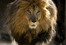 Africa's Pride☆°•○♡ / Our Beautiful African heritage ..