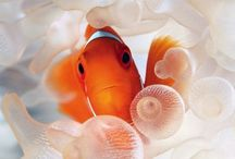 Nemo & Friends ⚣⚢⚨⚩ / Marine Life, marine biology, under the sea....down where its WETTER......ITS BETTER...take it from ME!!