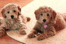 Puppy Love  / by Kristen Jessop