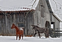 Farm / by Mindy Day