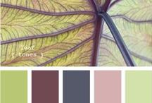 Color Inspiration / colors