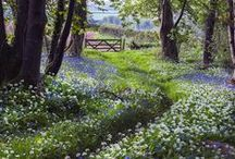 country side / by Lorna Doone