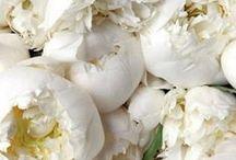 // Bloom