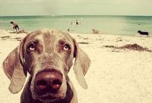 beachdogs / we are the dogs of this here beach.