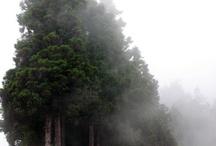 Landscapes &Trees