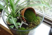 Amazing Terrariums / by Walpole Outdoors