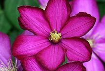 Radiant Orchid / Pantone's 2014 color of the year, Radiant Orchid, is a great hue to add into your garden or home decor this spring! / by Walpole Outdoors