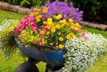 Spring Container Gardens / Welcome spring with wonderful container gardens, planters, and window boxes filled with colorful plants and flowers. / by Walpole Outdoors