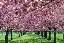 Gorgeous Gardens / Famous gardens, flower gardens, vegetable gardens… The best gardens we can find!