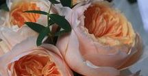 Peach Wedding Flowers / A collection of gorgeous wedding flowers ideas inspiring brides looking for peach wedding flowers