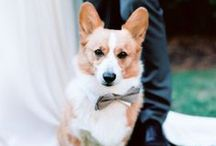 Wedding Pets / Don't forget about your four-legged friends on your wedding day! Let your pets join in the wedding fun.