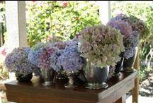 Hydrangeas / Hydrangeas wedding flowers - how you can use hydrangeas your wedding
