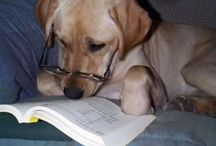 Canine Readers